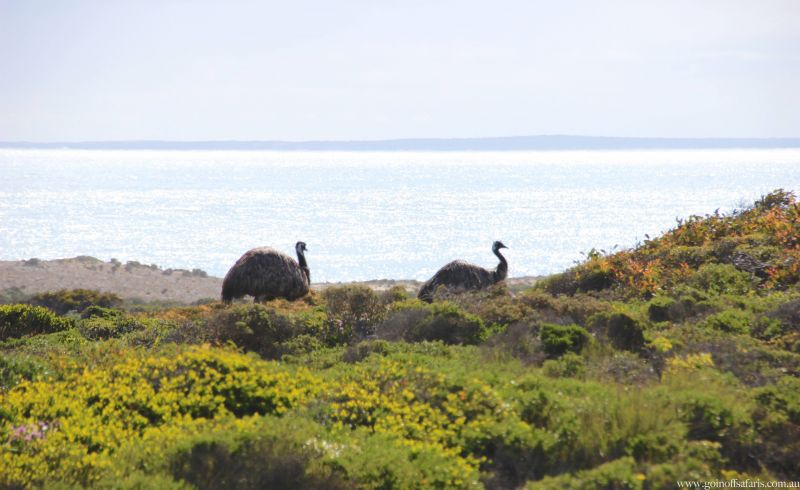 Goin Off - Blog 01 Emus
