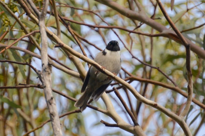 Premier Travel Blog - 01 Honeyeater