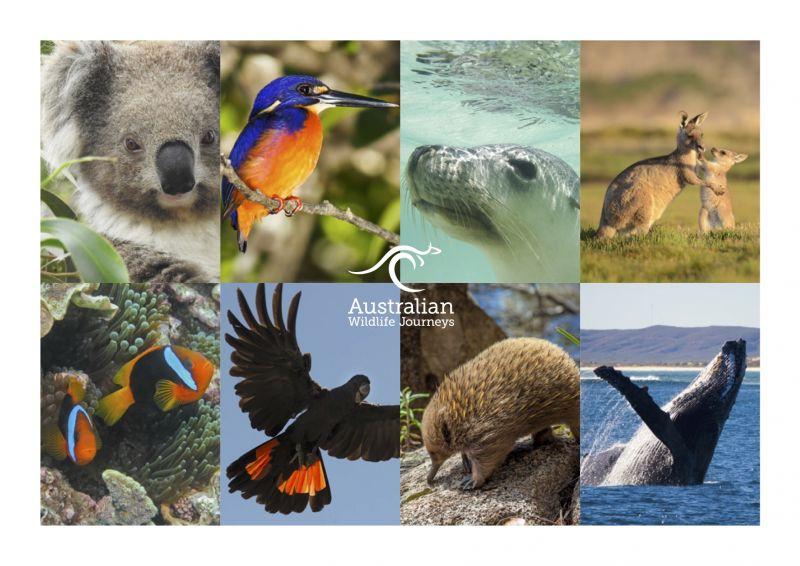 Australian Wildlife Journeys Brochure
